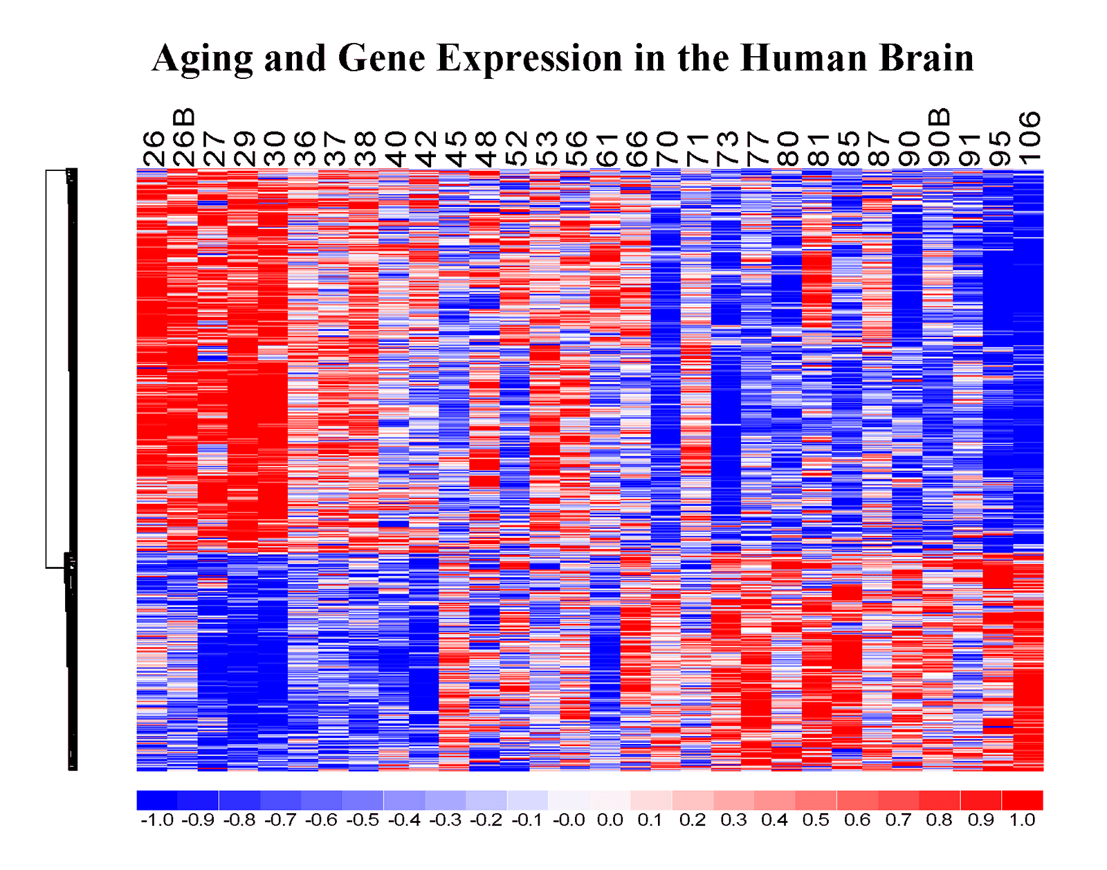 Gene Expression Patterns May Underlie >> Research Yankner Lab